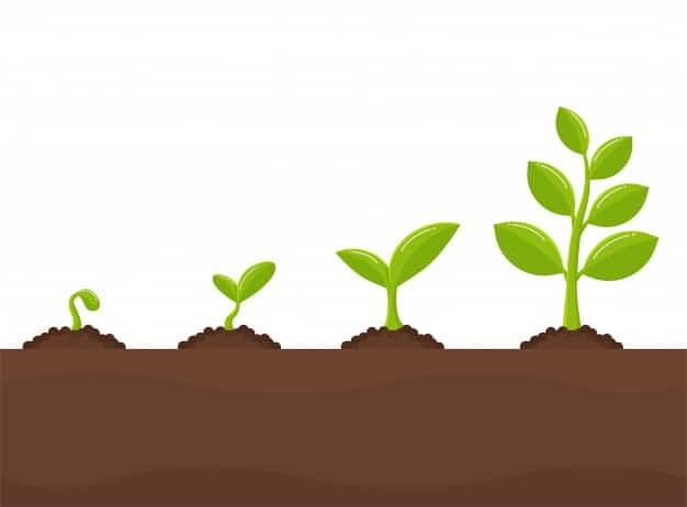 What You Reap - How To Calculate The ROI Of SEO Campaigns